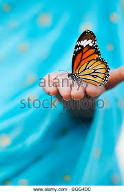 butterfly in stock photos butterfly in stock images