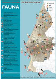 Cascais Portugal Map Leirão Eliomys Quercinus Não Ameaçado Fauna Da Serra De