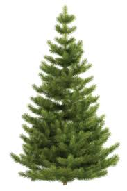 how and where to recycle or dispose your tree after the