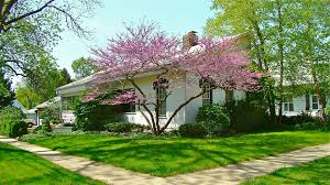 buy native grow native indiana native flowering trees pat hill u0027s natural midwest garden