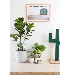 home interior plants 90 best inspiration indoor plants images on plants