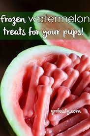 diy frozen watermelon dog treats dog summer and recipes