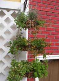 10 best potted and hanging vegetable garden ideas images on