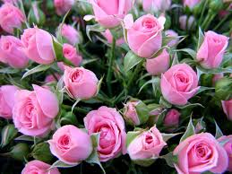 download wallpaper 1600x1200 roses flowers bouquet delicate