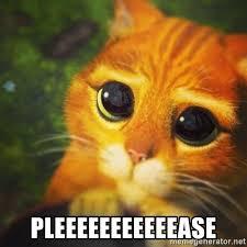 Puppy Face Meme - puppy face meme pets wallpapers