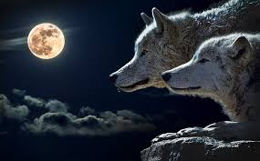 wolf torque moon free photo on pixabay
