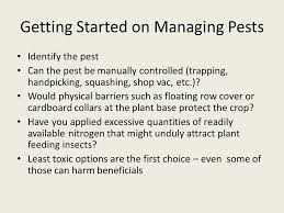 vegetable garden insects getting started on managing pests