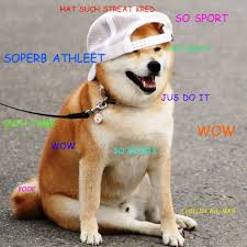 Much Dog Meme - shibe doge meme super athelete with much street cred