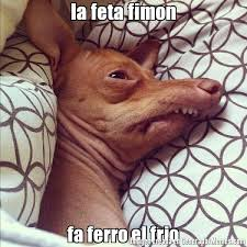 Memes De Chihuahua - memes de chihuahua dienton memes pics 2018