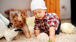 Baby Carpet Aurora Carpet Cleaning Professionals Modern Carpet Cleaning