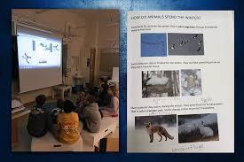 Animals In The Winter Animals In The Winter English Classes At Cygnaeus