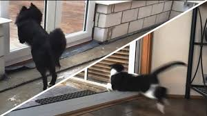 through the glass dog doors cats and dogs vs glass doors compilation new youtube