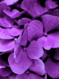 purple purple backgrounds polyvore