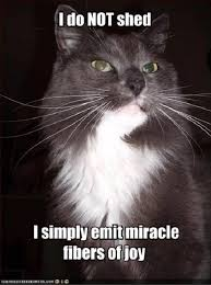 Funny Cat Lady Memes - corduroy the oldest living domestic cat in the world s funny