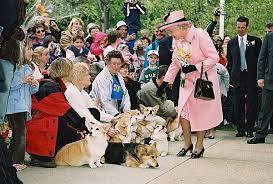 Queen Corgis Blue Water Corgis Congratulations Queen Elizabeth Ii