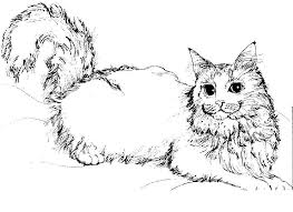 realistic cat coloring pages coloring page for kids