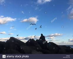 silhouette of man siting on rocks feeding fish to seagulls on the