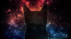 cat universe wallpaper free space cat wallpaper photo long wallpapers