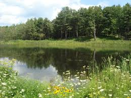 Backyard Pond Supplies by Pond Supplies In Rochester New York By National Pond Service