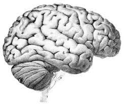 Human Anatomy Careers Career Ideas For Psychology Majors