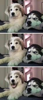 Dog Meme Generator - shiba inu joke meme funny shiba photos and made a comic dog meme