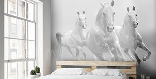 papiers peints chevaux mur aux dimensions myloview fr