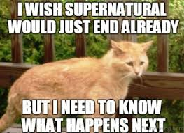 Funny Memes About Cats - 110 lovely cat memes