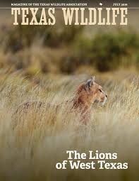 west texas native plants texas wildlife july 2016 the lions of west texas by texas
