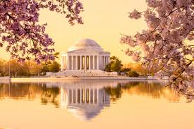 washington d c rolls out the pink carpet for the national cherry