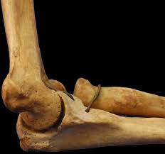 medical anthropology these bones of mine