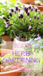 container herb gardening for beginners best apartment gardens