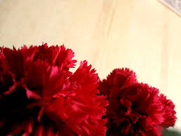 Red Carnations Red Carnations Children U0027s Ministry