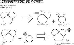 acids bases and the dissociation of water