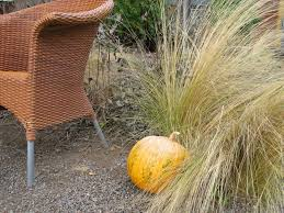 17 drought tolerant ornamental grasses
