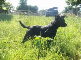 this week u0027s dspca animals that need some lovin homes lovin dublin