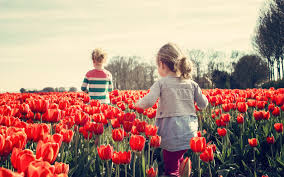 children playing in the land of tulips hd wallpapers 4k