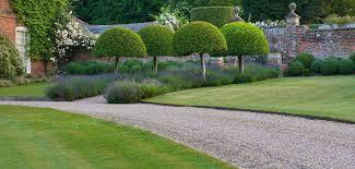 native uk plants wholesale plant nursery uk trees trade kingsdown nurseries