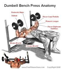 Bench Press Assistance Work Best 25 Bench Press Workout Ideas On Pinterest Bench Press