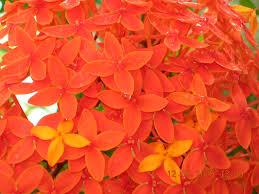 Orange Colors Names File Orange Flower0001 Jpg Wikimedia Commons