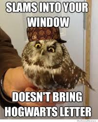 Funny Owl Meme - scumbag owl meme weknowmemes