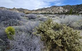 New York mountains images Oc caruthers canyon in the remote new york mountains mojave jpg