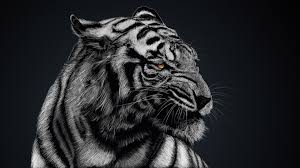 tiger print wallpaper hd