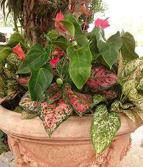 use tropical shade plants in your garden costa farms