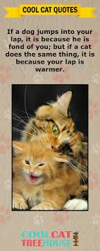 Awesome Quotes About Cats Being - 60 best artistic expression quotes images on pinterest the words