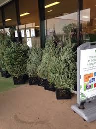 they starting to sell those trees yelp