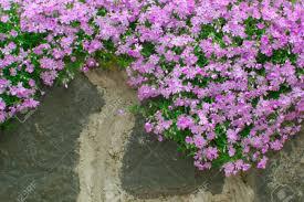garden walls stone flowers for garden walls home outdoor decoration