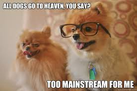Pomeranian Meme - all dogs go to heaven you say too mainstream for me hipster