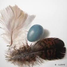 turkey feather painting feathers and egg botanical painting blue robin s egg turkey