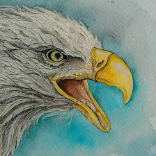 bald eagle bird original watercolor painting on paper by susana