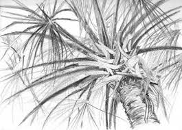 drawn palm tree pencil sketching pencil and in color drawn palm